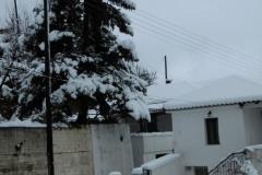 201901-chionia-P1000523-5