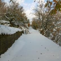 Ανηφορίζοντας. χρυσοπράσινα δένδρα στο χιονισμένο τοπίο