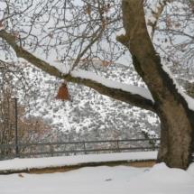 ο Πλάτανος του Άγιο Θανάση χιονισμένος